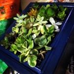 Succulent Planter1